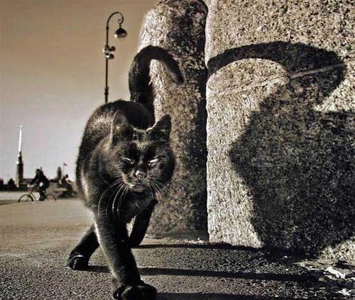 Запорожские правоохранители  пресекли преступную деятельность местной «Черной кошки», но, похоже, не надолго