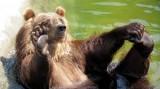 Российский бомж отбился от медведя высокими технологиями